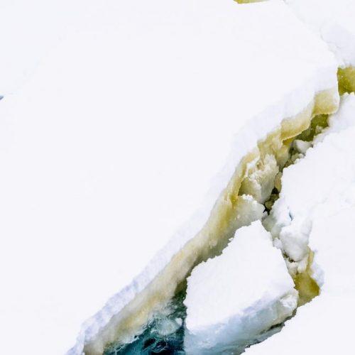 Phytoplankton growing in seasonal marine ice-985x652